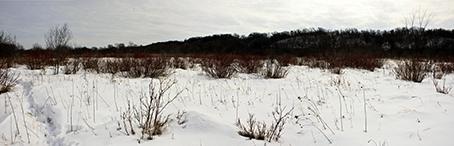 Seepage Meadow/Carr
