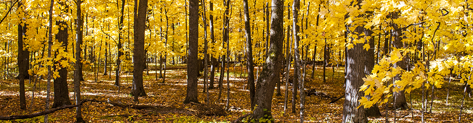 MinnesotaSeasons.com Blog